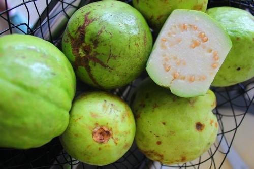 guava sri lanka