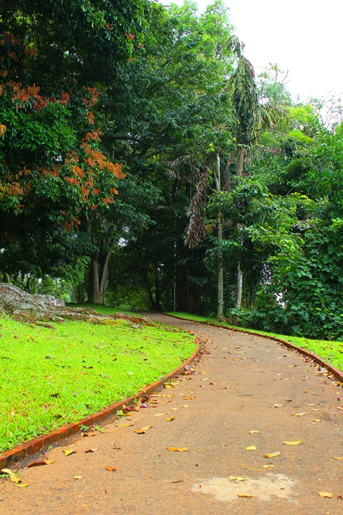 royal botanical gardens Peradeniya