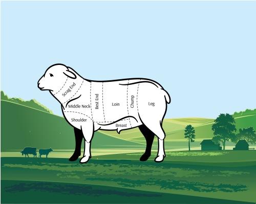 lamb cuts guide